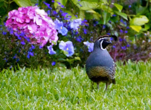 photo inspiration for art quilt Backyard Quail