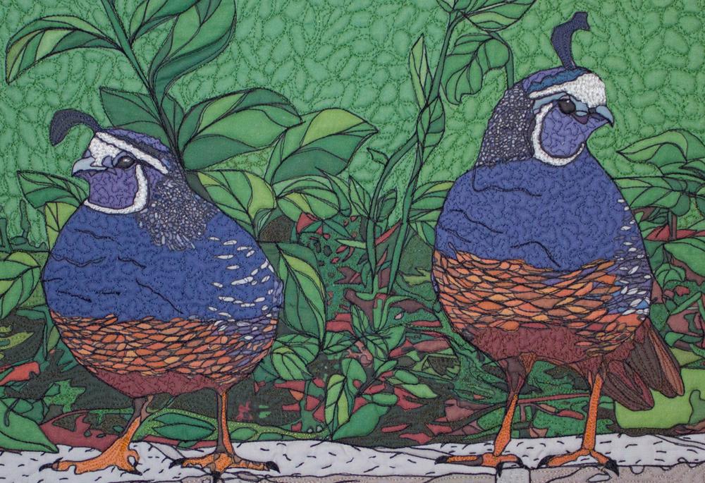 backyard wildlife portraits ipad style california quail